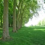 Vaux-le-Vicomte, gardens