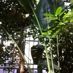 Grande Serre tropicale